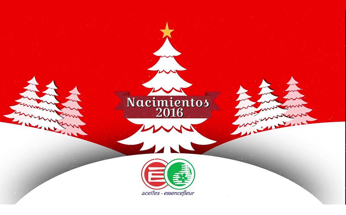 christmas tree shop attleboro ma - Christmas Tree Shop Pembroke